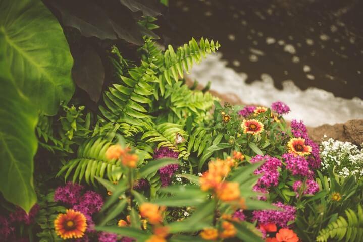 Por qué estudiar Paisajismo y jardinería